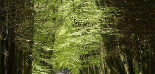 Kampeerverblijfpark Salamander - Maasmechelen - Fiets & wandelcafé